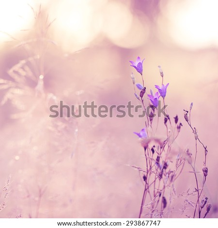 lilac soft blowers on pink background
