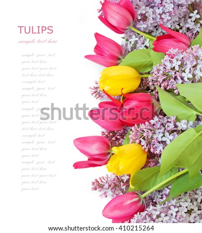 Lilac, tulips flowers background isolated on white with sample text - stock photo