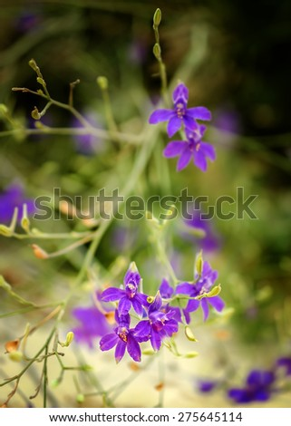 Lilac wild flowers on a beach, selective focus with a blurred background.