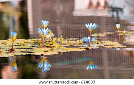 Lilies like a painting (exclusive at shutterstock) - stock photo