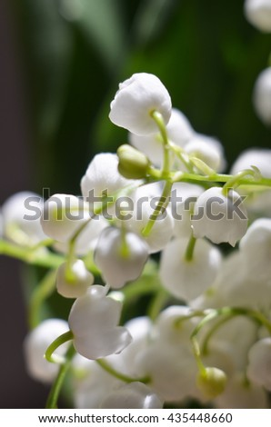 lilies of the valley