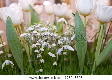 Lilies of the valley, tulips and snowdrops - stock photo