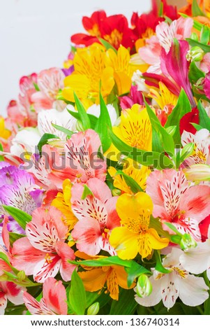 Фото цветы альмерия