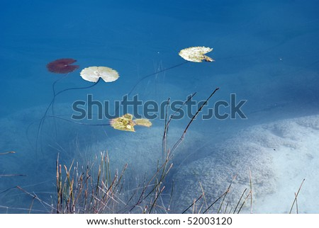 Lillies grow over a freshwater stromatolite reef in Cuatro Cienegas Biosphere Reserve in the  Mexican state of Coahuila - stock photo