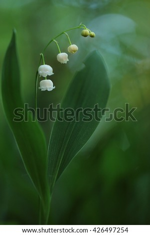 Lilly of the valley on natural background - stock photo
