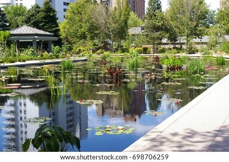 Lilly Pond In The Denver Botanic Gardens