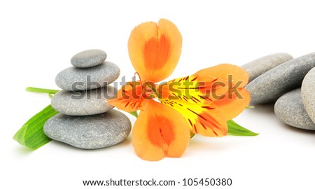 Lily flower and pebble. Isolated on white background - stock photo