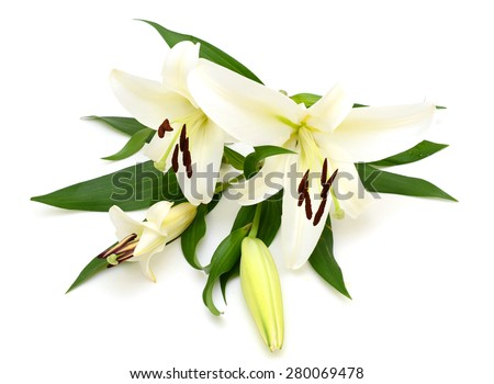 lily flower isolated on white background - stock photo