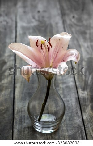 Lily flower over rustic wooden background, close up - stock photo