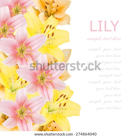 Lily flowers background isolated on white with sample text - stock photo