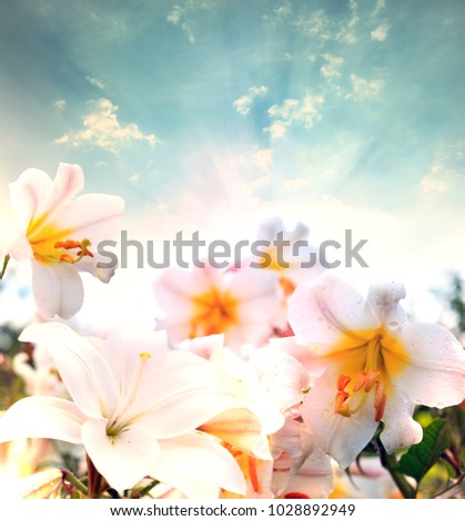 Lily flowers border design spring flowers stock photo image lily flowers border designspring flowers mightylinksfo