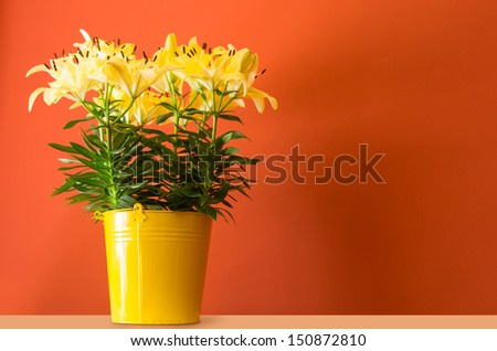 lily flowers in yellow bucket - stock photo