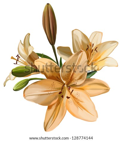 Lily isolated on white background. Bitmap copy my vector - stock photo