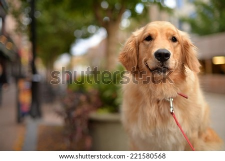Lily keeps State Street safe (Madison) - stock photo