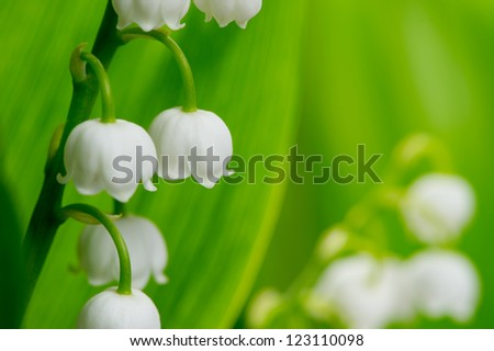 lily of the valley - stock photo