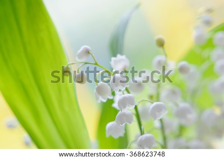 Lily of the valley bouquet on natural background