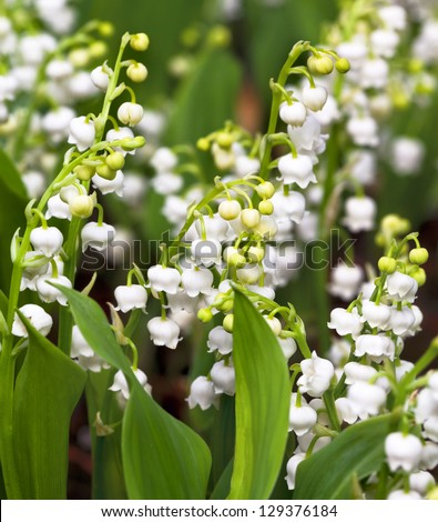 Lily of the valley. Floral pattern. - stock photo