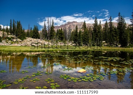 Lily Pads on a mountain pond in the Unitas in Utah/ Hayden Peak and the Lily pond