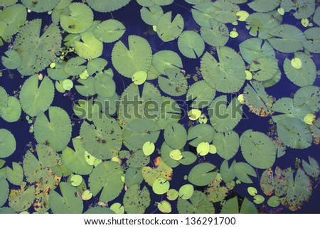 Lily pads texture - stock photo