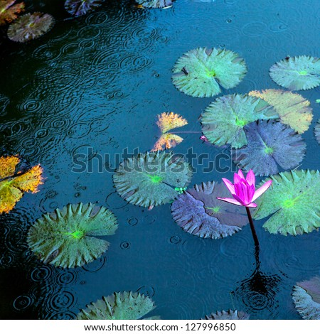 lily under the rain - stock photo