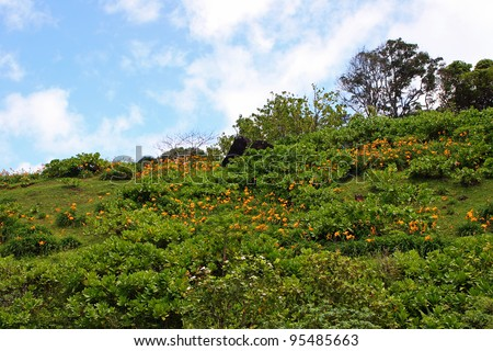 Limahuli National Tropical Botanical Gardens Kauai Hawaii