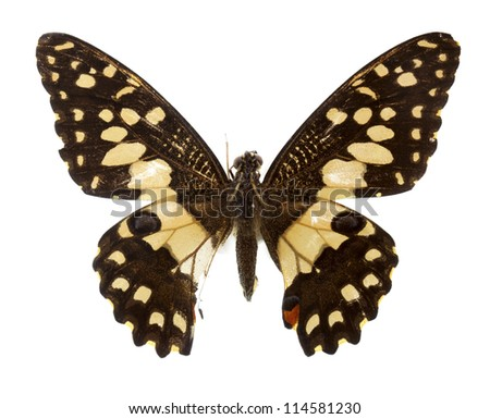 lime butterfly on white - stock photo