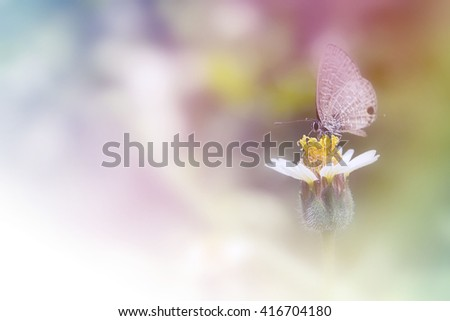 Lime butterfly on  white coat buttons flower with blur background. butterfly on orange flower, collecting nectar from flower, fill color filter pastel gradient tone. - stock photo