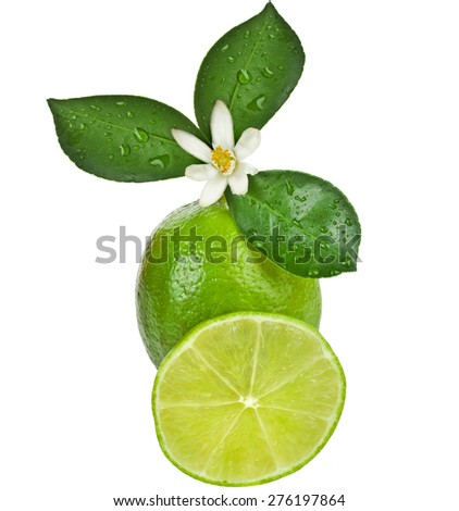 Lime citrus fruit with leaves close up isolated on white background - stock photo