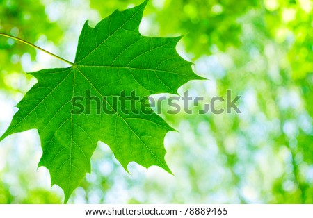 Lime green leaves on a white background - stock photo