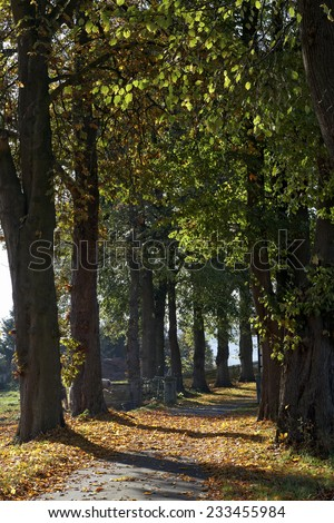 Lime grove in autumn in Lower Saxony, Germany, Europe - stock photo