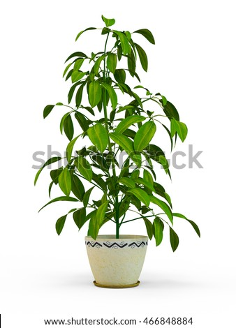 Lime tree plant in a flower pot isolated on white background. 3D Rendering, Illustration.