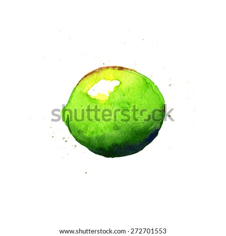 Lime. Watercolor illustration on a white background