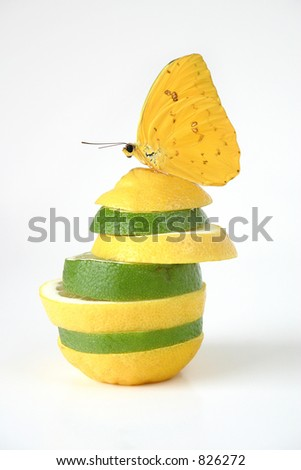 Limon: Creative twist on conceptual images for food, health, etc.  A phoebus philea butterfly on a stack of juicy wedges of lemon and lime.