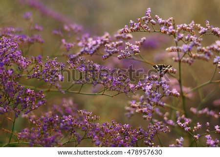 Limonium gmelinii flowers and butterfly on summer meadow.