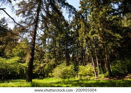 Lincoln Park is a major multi-purpose park in West Seattle along the Puget Sound. - stock photo