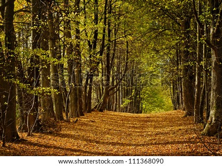 linden alley in autumn with fall leaves - stock photo