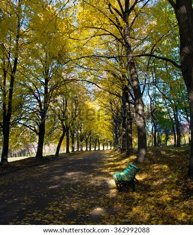 Linden alley in Kiev Botanical garden in the fall. Ukraine - stock photo