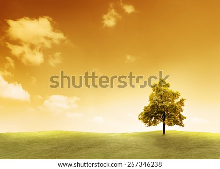 Linden Tree on a meadow with sunset - stock photo