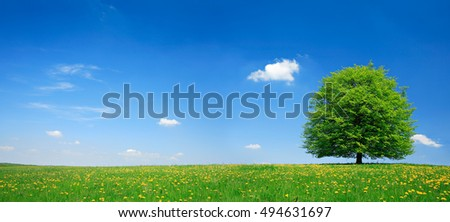Linden Tree on Meadow full of Dandelion Flowers in Spring Landscape under Blue Sky with Clouds