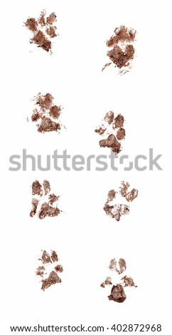 Line of dirty dog paw prints made with real mud. Isolated on white background - stock photo