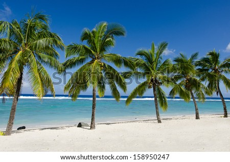 Line of five coconut palm trees at Titikaveka beach in Rarotonga Cook Islands during sunset.