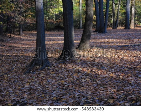 Line of Trees - Fallen leaves and trees in autumn.