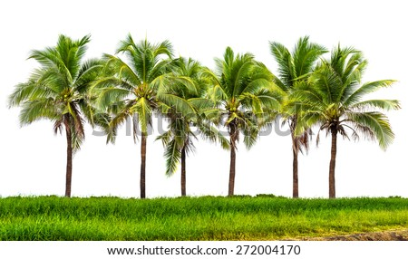 Line up of coconut tree and grassland isolated on white background - stock photo