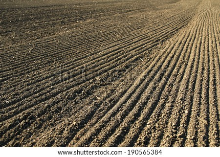 line with seeds on agriculture field soil - stock photo
