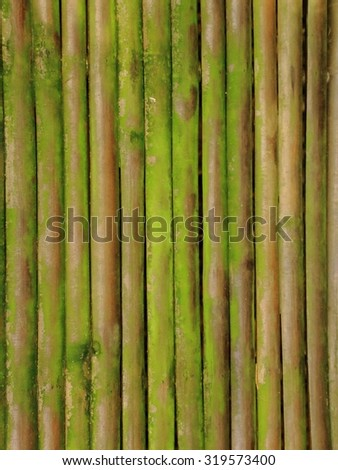 Lined Bamboo wood covered by green moss