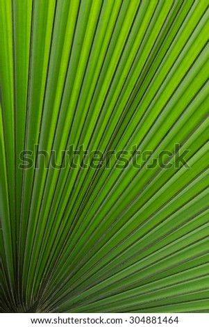 Lines and textures of Green Palm leaf as a background