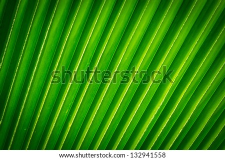 Lines and textures of Green Palm leaves, background - stock photo