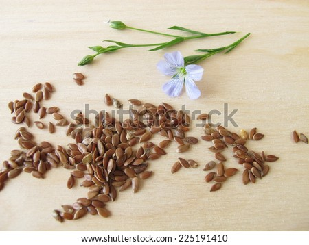 Linseed and blue flax flower - stock photo