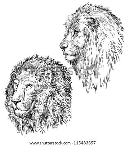 lion sketch stock images royalty free images vectors shutterstock. Black Bedroom Furniture Sets. Home Design Ideas