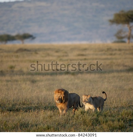 Lion and Lioness at the Serengeti National Park, Tanzania, Africa - stock photo